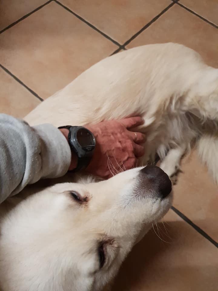 Stella - femelle - fourrière de Târgu Frumos - réservée adoption (68) 47067110