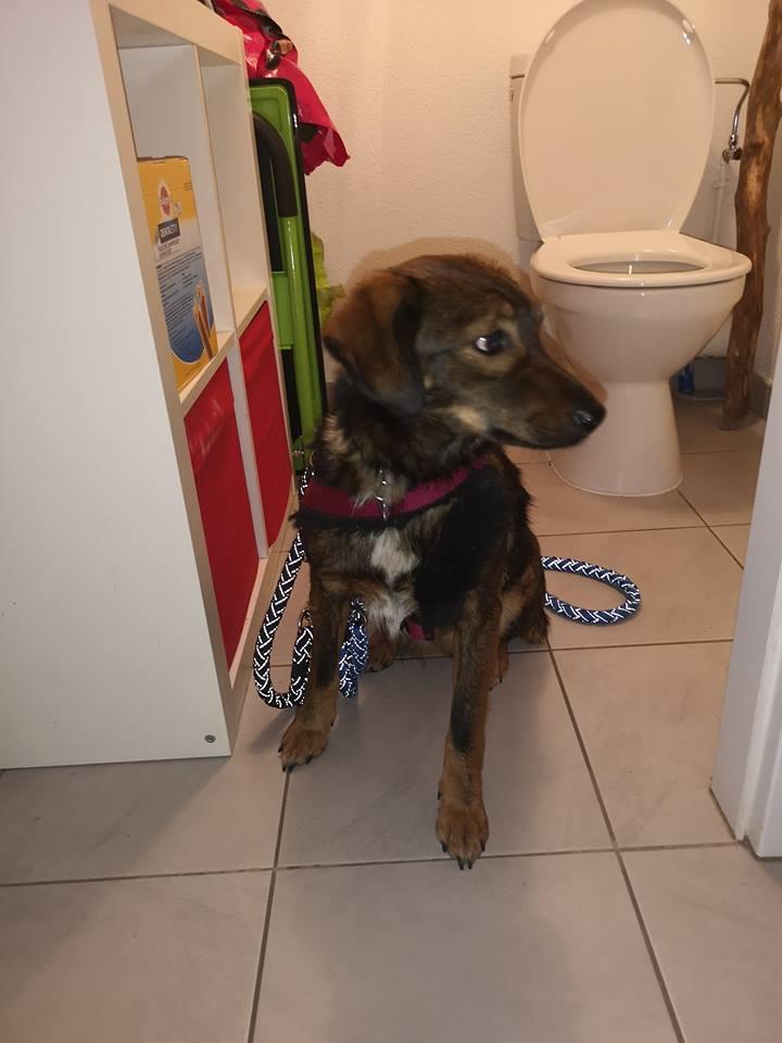 Mila (ex-Brownie) - femelle - refuge de Târgu Frumos  - adoptée (67) 48038510