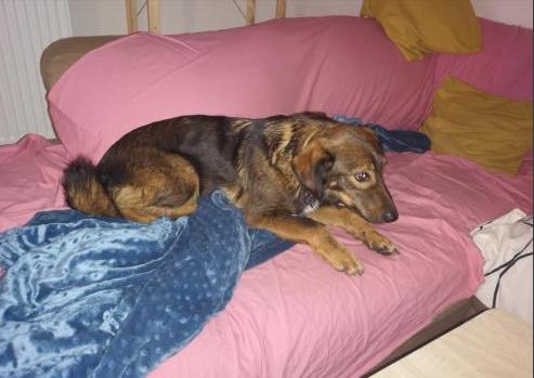 Mila (ex-Brownie) - femelle - refuge de Târgu Frumos  - adoptée (67) 48168110