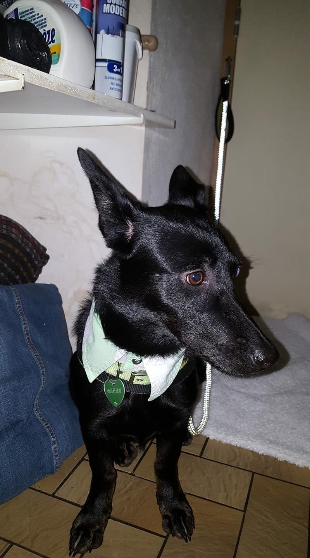 Lena - femelle - Târgu Frumos - réservée adoption (67) 48356310