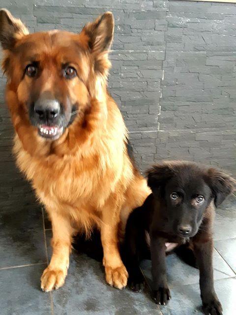 Pixis - mâle - chez Andreea à Târgu Frumos-reservé adoption 68 48975110