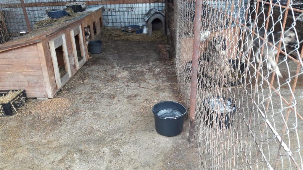 La fourrière communale de Târgu Frumos 49189210