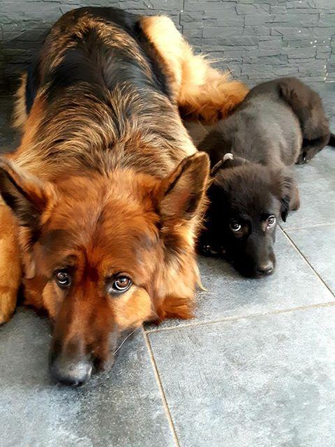 Pixis - mâle - chez Andreea à Târgu Frumos-reservé adoption 68 49384810