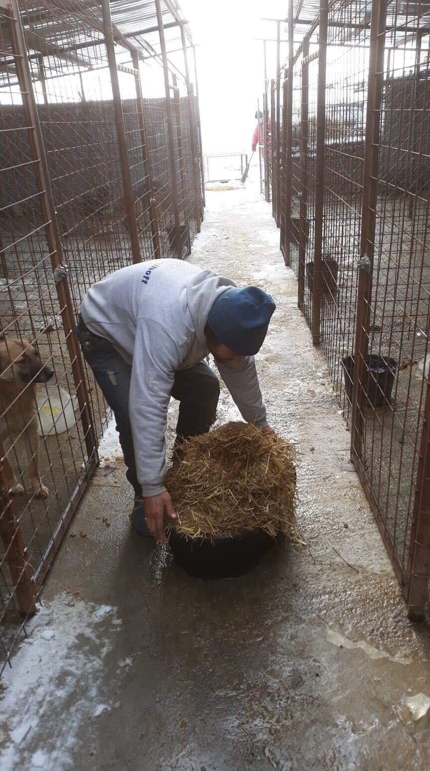 La fourrière communale de Târgu Frumos 49897210