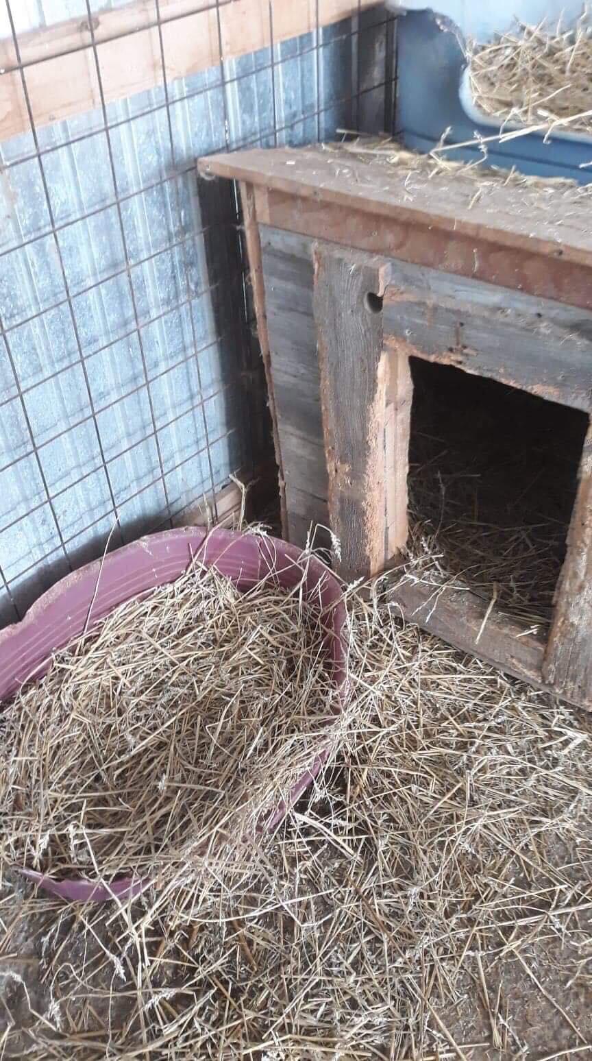 La fourrière communale de Târgu Frumos 49897611