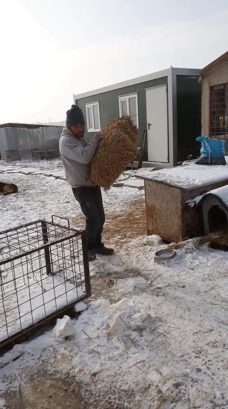La fourrière communale de Târgu Frumos 50009410