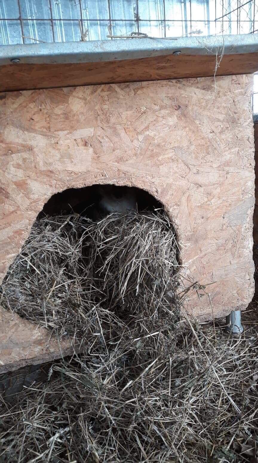 La fourrière communale de Târgu Frumos 50140810