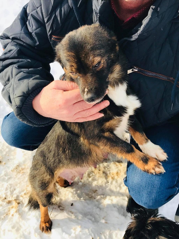 Mielle (ex-Sansa) - femelle - Târgu Frumos - adoptée (68) 50259410