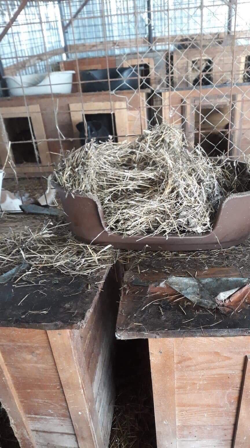 La fourrière communale de Târgu Frumos 50294410