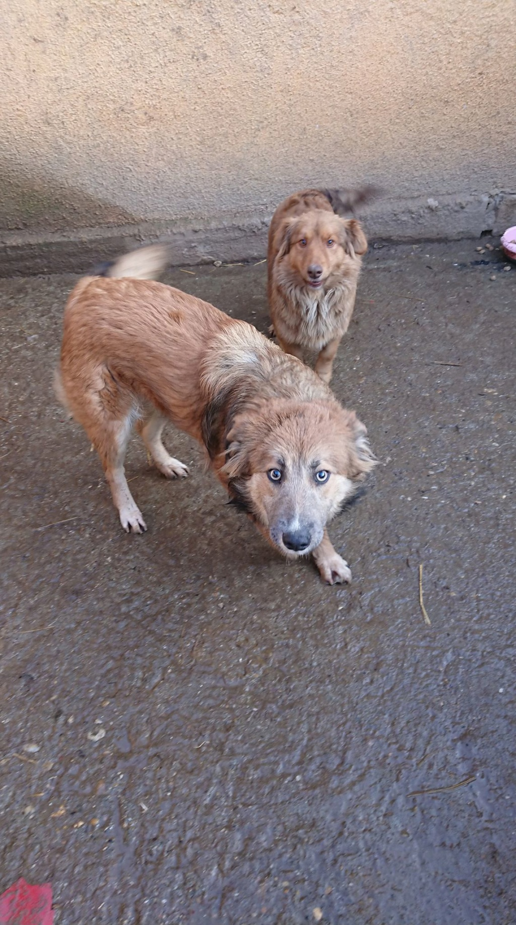 Ohmnia (ex-Zoey) - femelle - refuge d'Arad - réservée adoption (68) 50469211