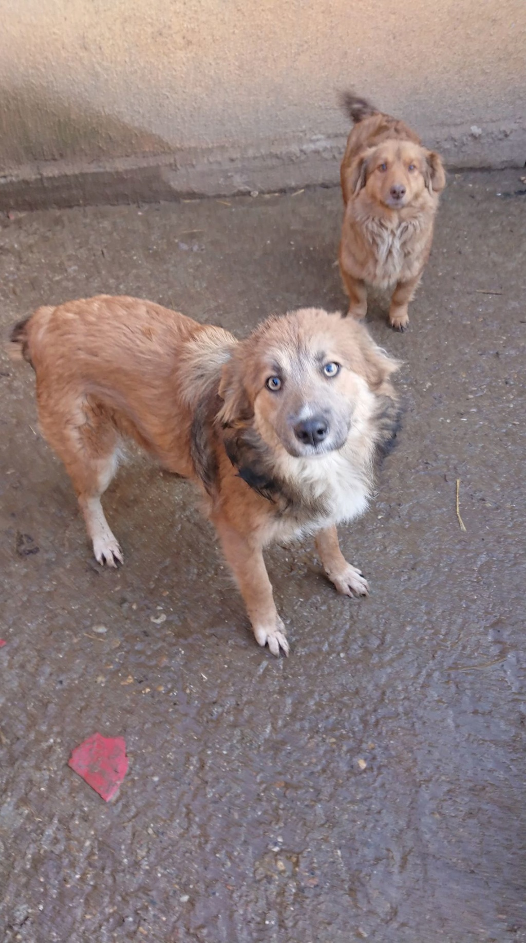 Ohmnia (ex-Zoey) - femelle - refuge d'Arad - réservée adoption (68) 50488611