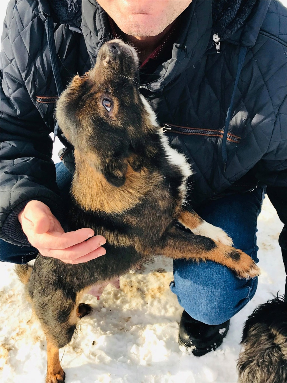 Mielle (ex-Sansa) - femelle - Târgu Frumos - adoptée (68) 50527310