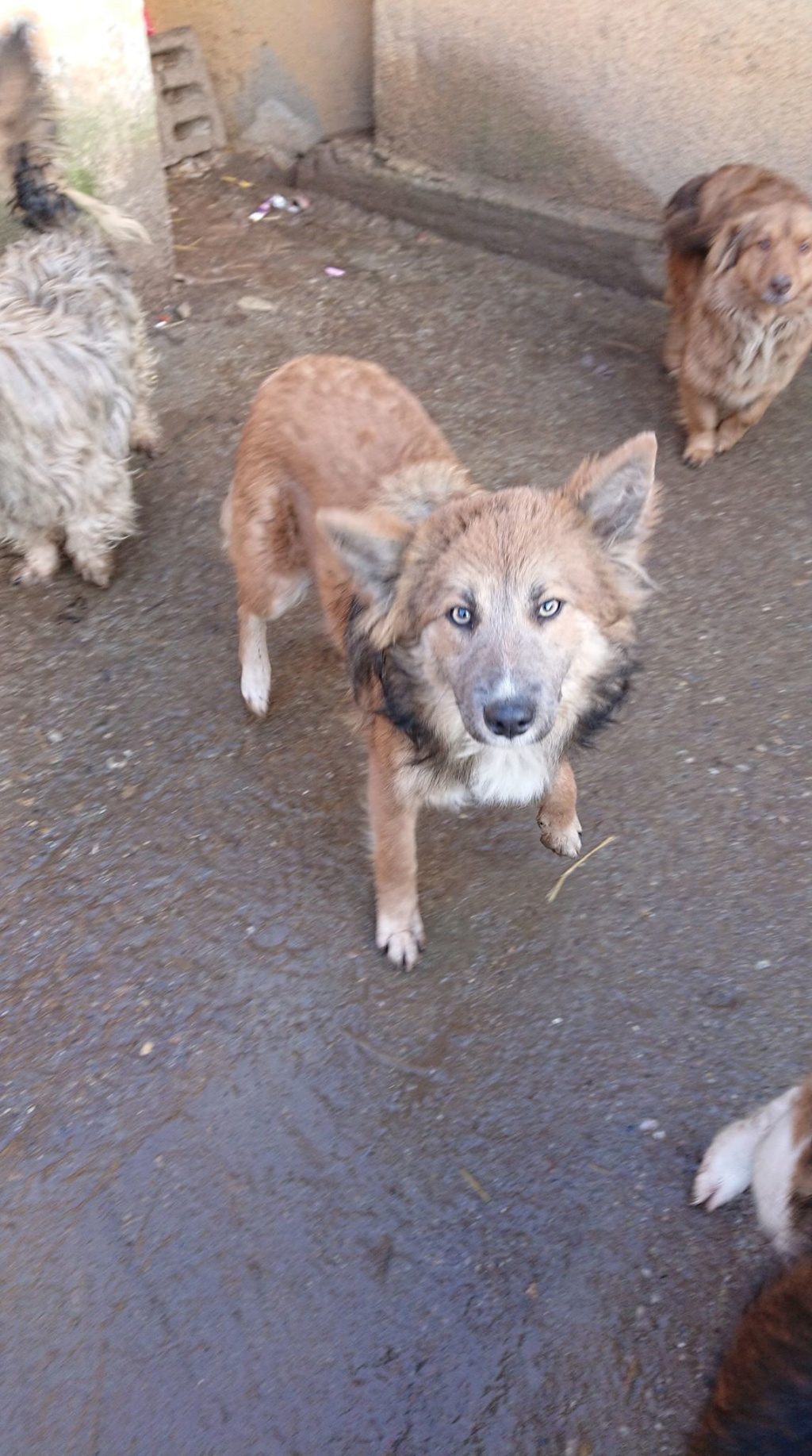 Ohmnia (ex-Zoey) - femelle - refuge d'Arad - réservée adoption (68) 50528010