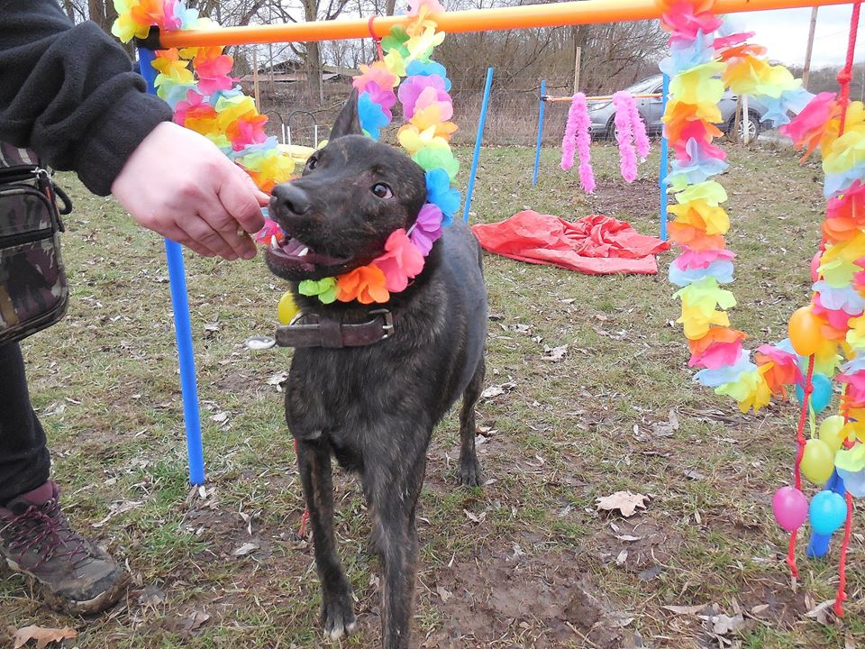 Cooky (ex-Newton) - mâle - Târgu Frumos - réservé adoption (67) 50650210