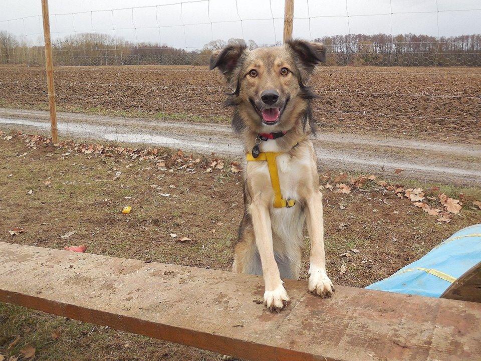 Hizia (Bella chez Rudy) - femelle - chez Rudy (Iasi) - réservée adoption (67) 50754110