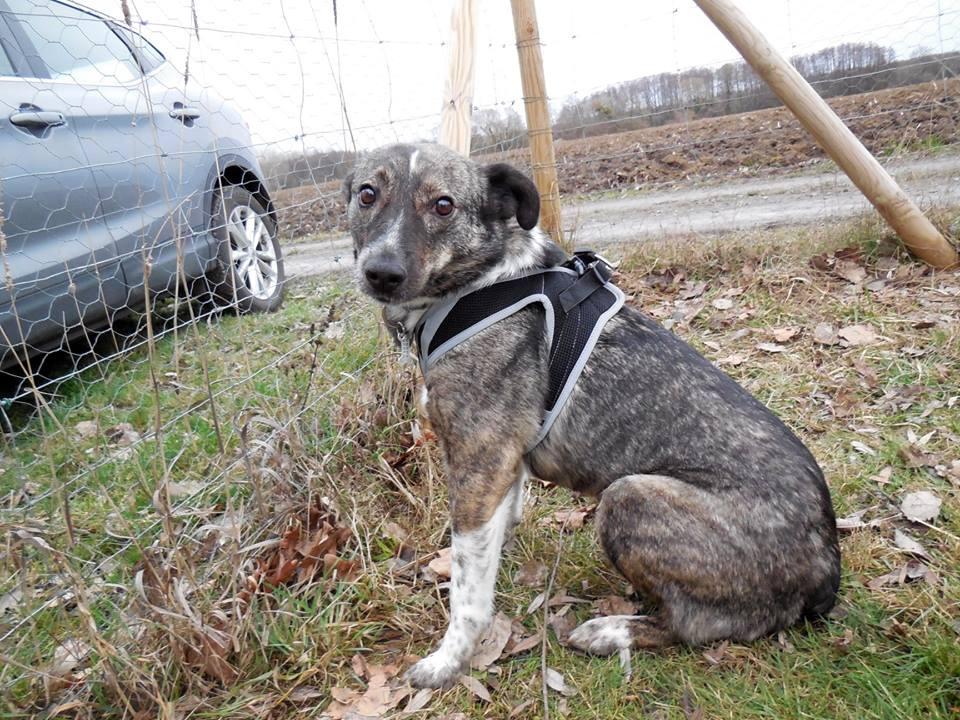 SCRATCH (ex-Toto) - mâle - refuge de Târgu Frumos réservé adoption 67 50826110