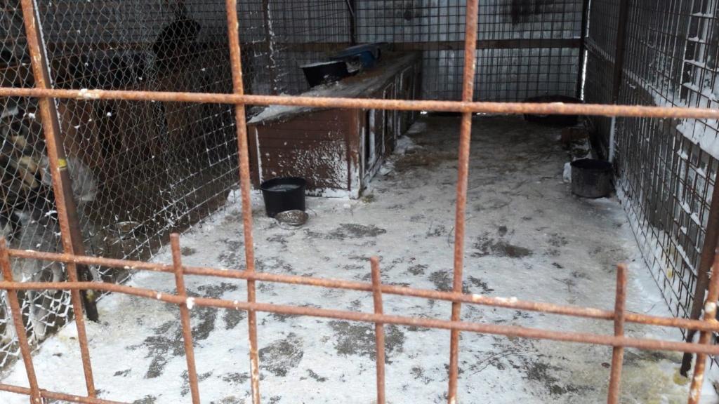 La fourrière communale de Târgu Frumos 50850110