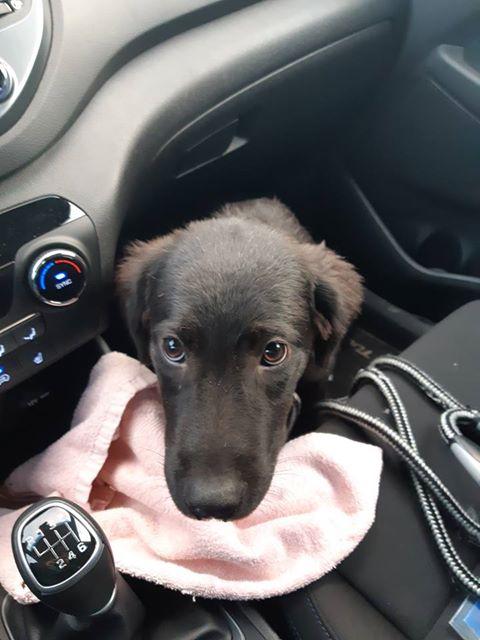 Pixis - mâle - chez Andreea à Târgu Frumos-reservé adoption 68 51128910