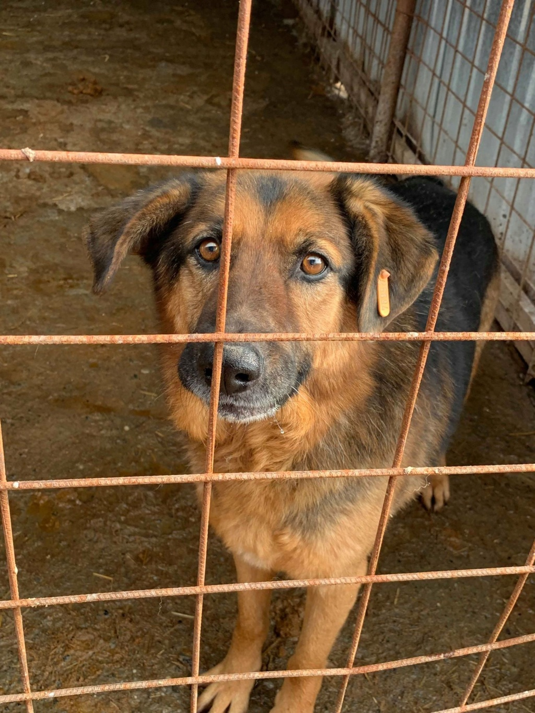 Lunky - mâle -  fourrière de Târgu Frumos - frais d'adoption réduits 51611010