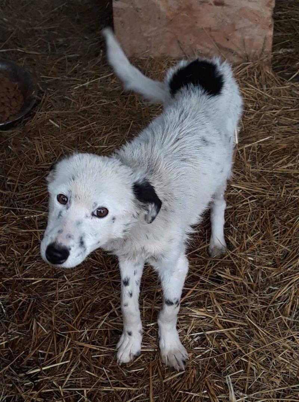 Tchobo (ex-Twist) - mâle - refuge de Tragu Frumos - Réservé adoption (76 et 92) 51633310