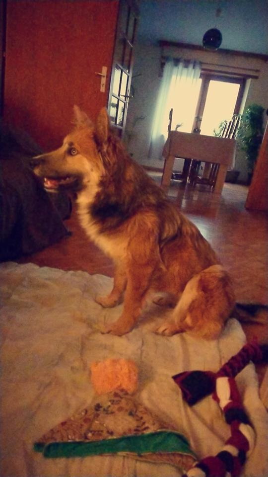 Ohmnia (ex-Zoey) - femelle - refuge d'Arad - réservée adoption (68) 51661610