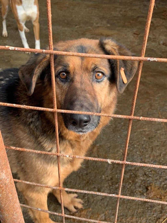 Lunky - mâle -  fourrière de Târgu Frumos - frais d'adoption réduits 51675410