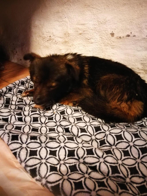 Mielle (ex-Sansa) - femelle - Târgu Frumos - adoptée (68) 51769710