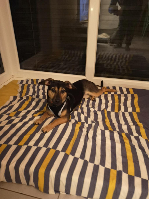 Etna - femelle - chez Andreea (Târgu Frumos) - reservé adoption 67 51998510
