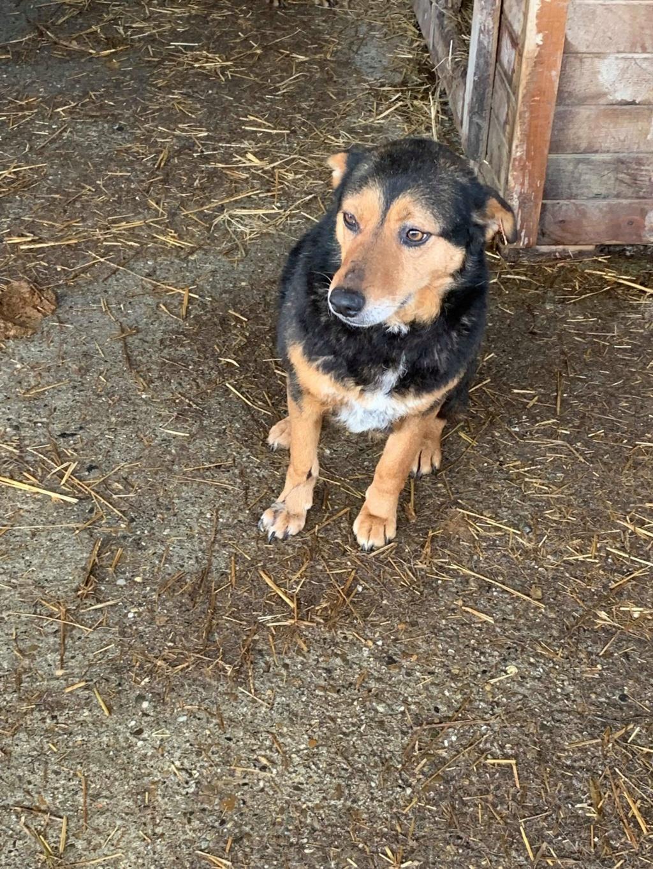 IceTea - femelle - fourrière de Târgu Frumos - décédée  52308610