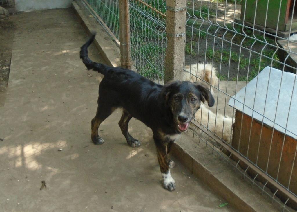 Maya (ex Mae West) - femelle- refuge d'Arad-réservée adoption 67 52949210