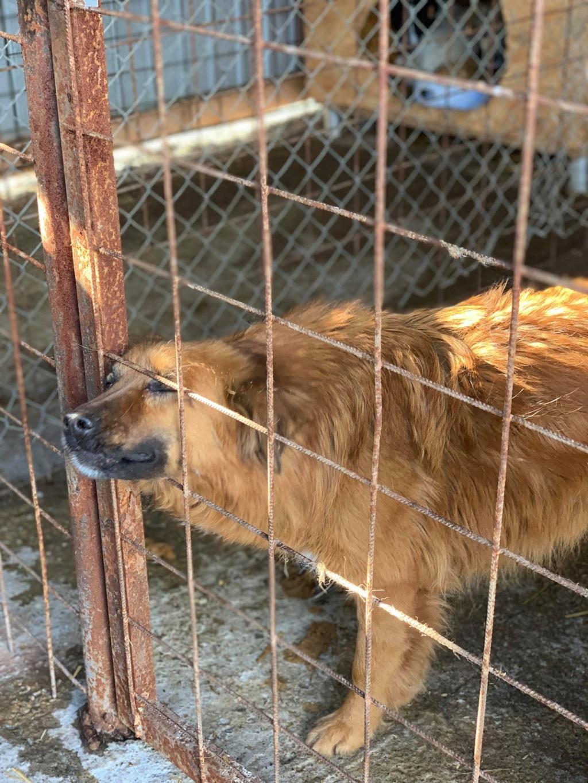 Castille- femelle- dans les rues de Targû Frumos - sera en famille d'accueil dans le 67 en juin 53154910