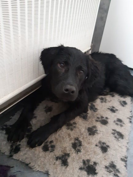 Pixis - mâle - chez Andreea à Târgu Frumos-reservé adoption 68 53221610