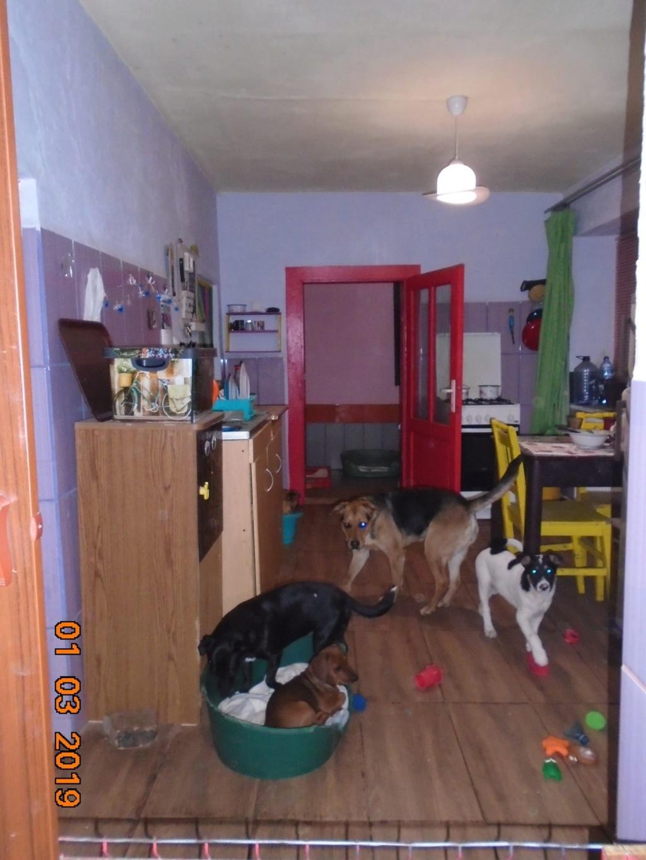 Dolphy- mâle- refuge d'Arad 53283310