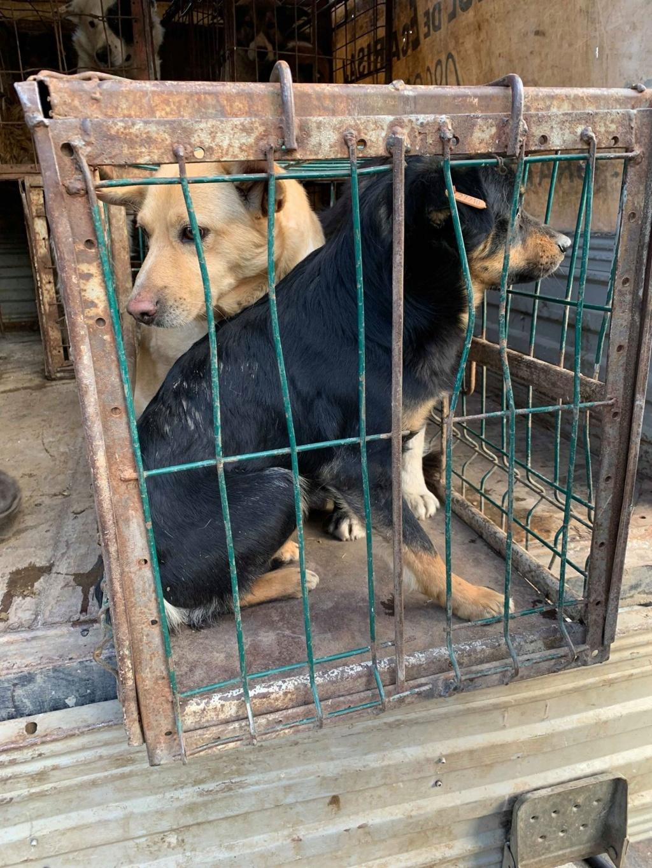 La fourrière communale de Târgu Frumos 53781510