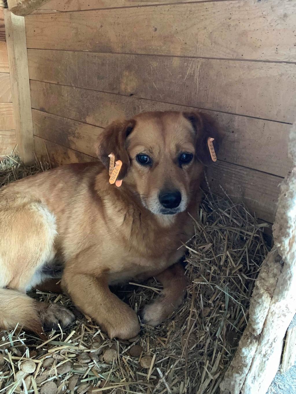 Cosmo - mâle - fourrière de Târgu Frumos - Réservé adoption (68) 53902710