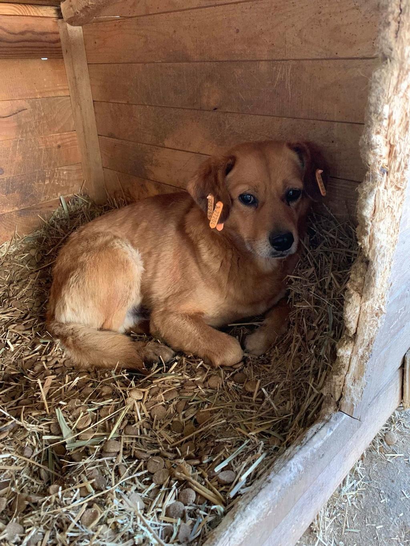 Cosmo - mâle - fourrière de Târgu Frumos - Réservé adoption (68) 54224910