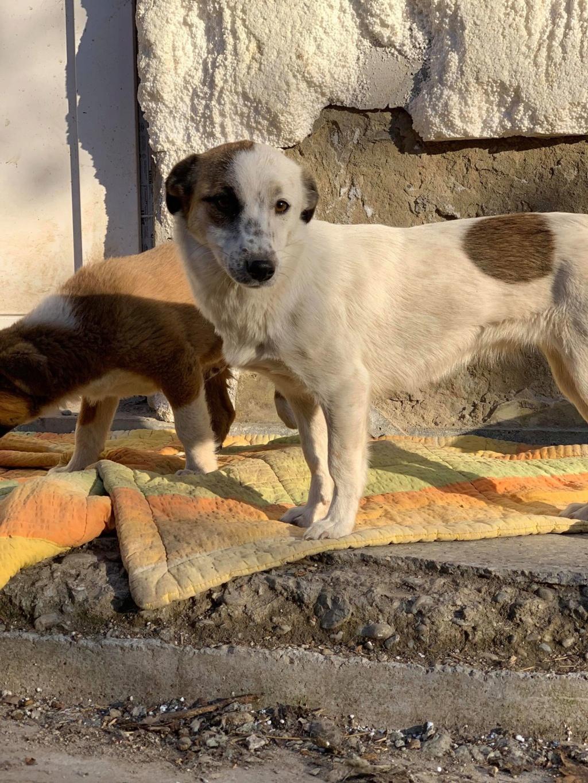 Pimkie- femelle- fourrière de Targû Frumos - sera en famille d'accueil dans le 67 en mai 55957710