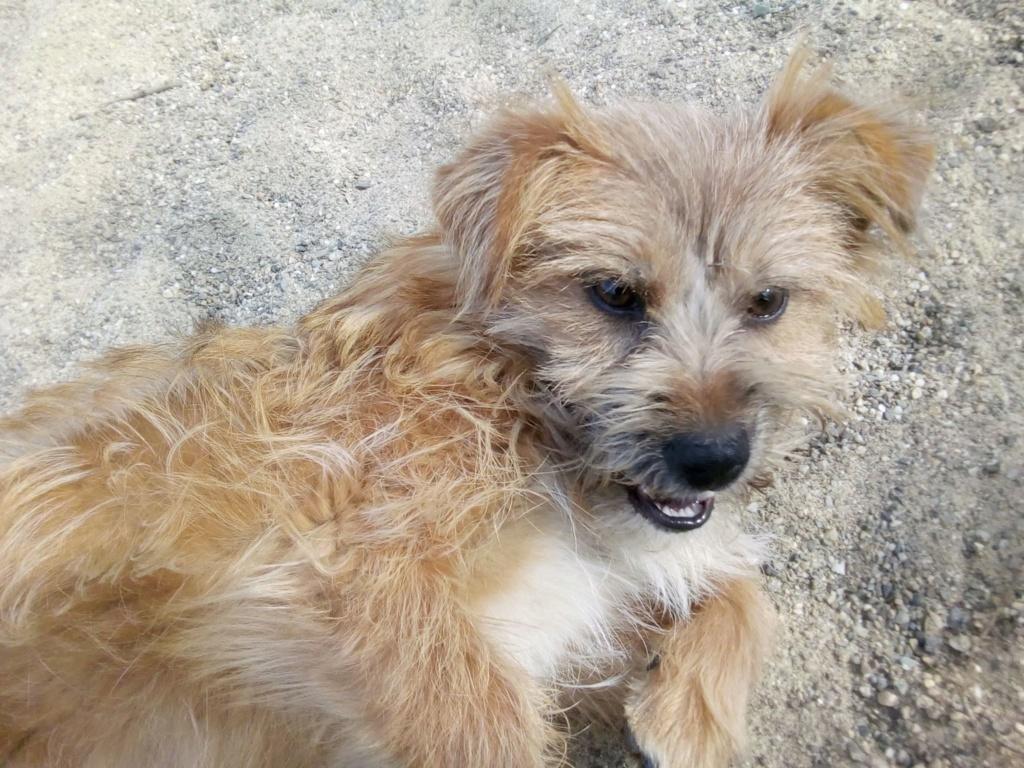 Fluffy-femelle- refuge de Targu Frûmos - Adoptée via Andreea 56162310