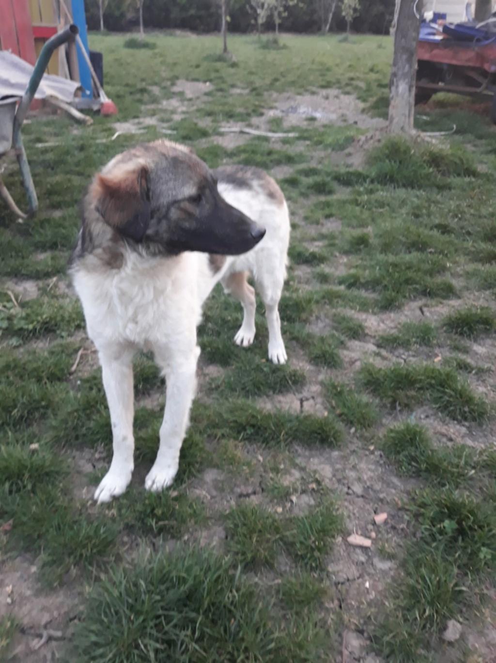 Ziggy-mâle-refuge d'Arad - adopté via Arad 56165110