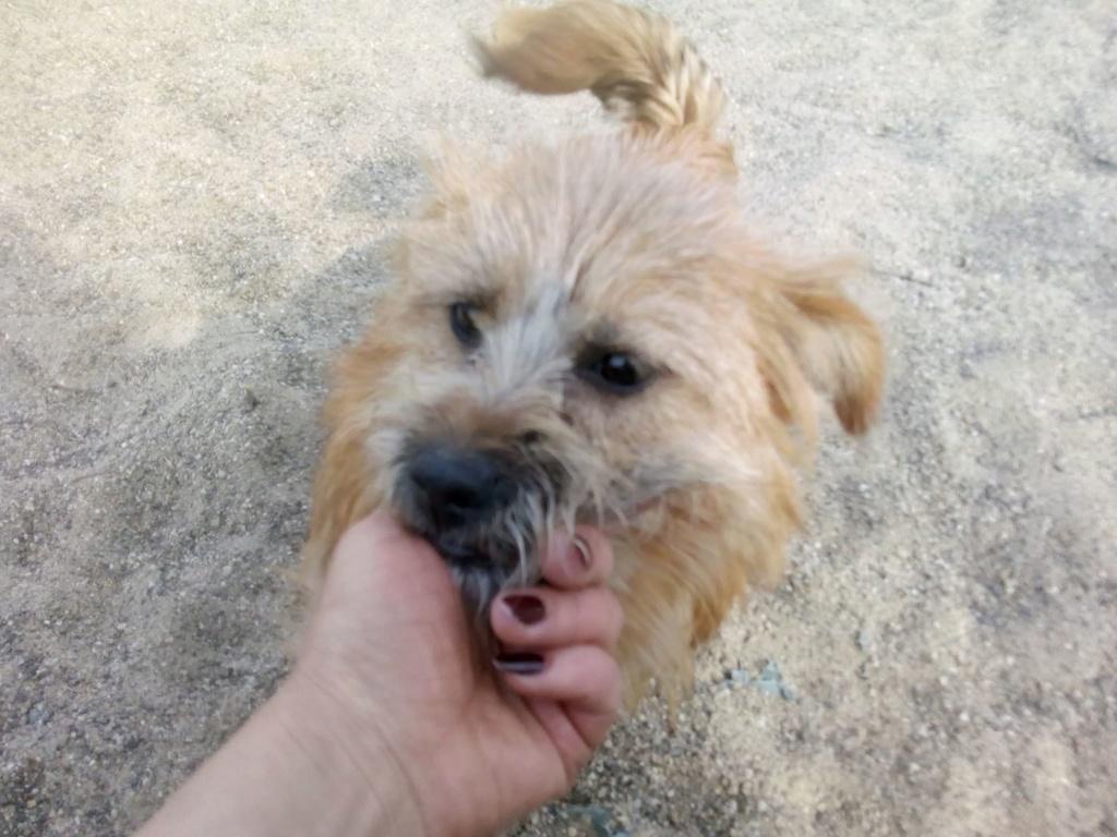 Fluffy-femelle- refuge de Targu Frûmos - Adoptée via Andreea 56320410