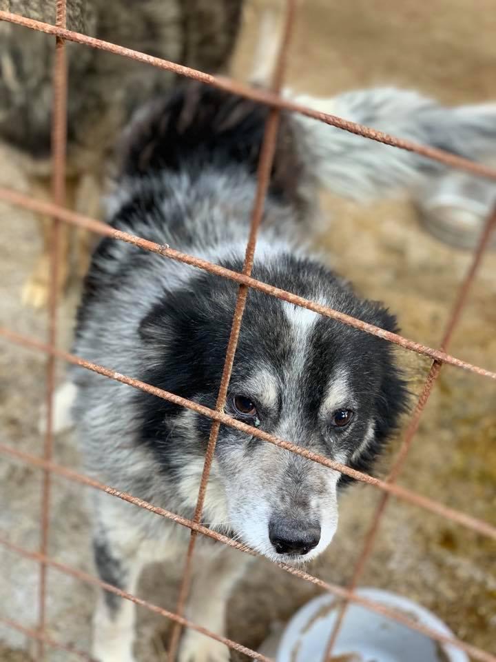 Scottie - mâle - Fourrière de Târgu Frumos - Frais d'adoption réduits - En famille d'accueil dans le 67 56325110