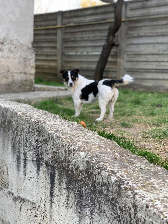 Joliette - femelle - chez Andreea (Târgu Frumos) 56615110