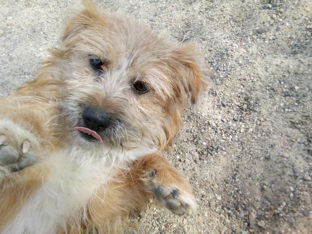 Fluffy-femelle- refuge de Targu Frûmos - Adoptée via Andreea 56721610
