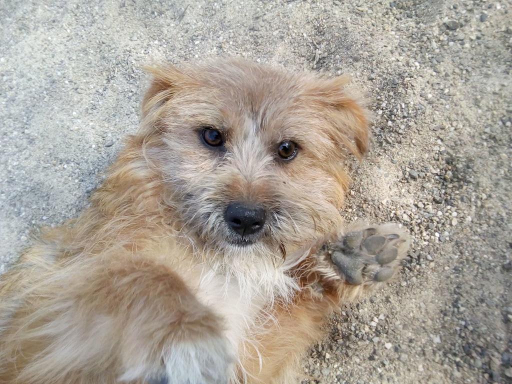 Fluffy-femelle- refuge de Targu Frûmos - Adoptée via Andreea 56734910
