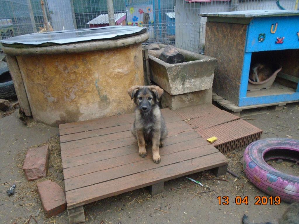 Kindo (ex-Nathaniel) - mâle- refuge d'Arad - réservé adoption (68) 56917811