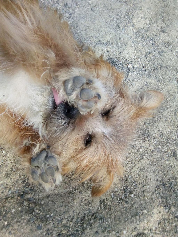 Fluffy-femelle- refuge de Targu Frûmos - Adoptée via Andreea 56922710