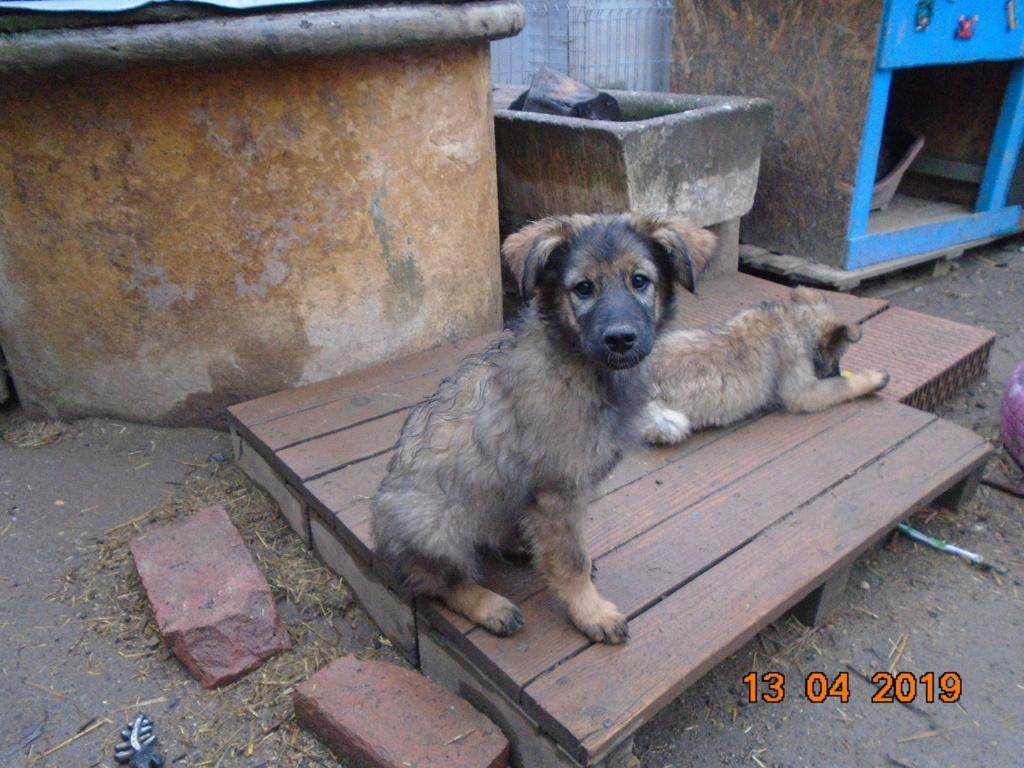 Kindo (ex-Nathaniel) - mâle- refuge d'Arad - réservé adoption (68) 56990210