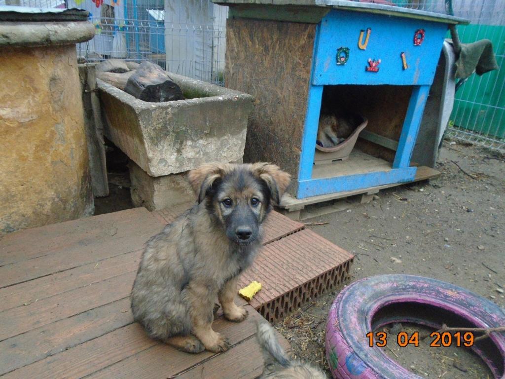 Kindo (ex-Nathaniel) - mâle- refuge d'Arad - réservé adoption (68) 56994010