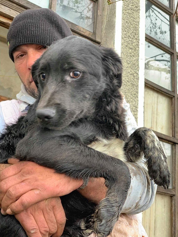 Brent-mâle- dans la maison abandonnée à Târgu Frumos 57006210