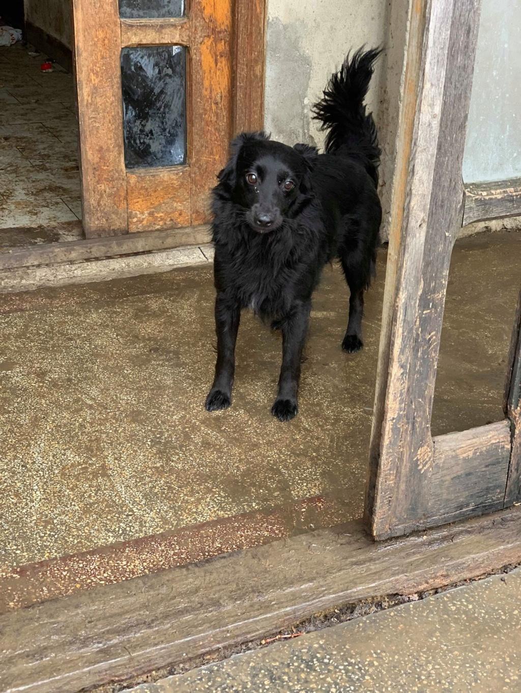 Olga- dans la maison abandonnée à Târgu Frumos 57064213